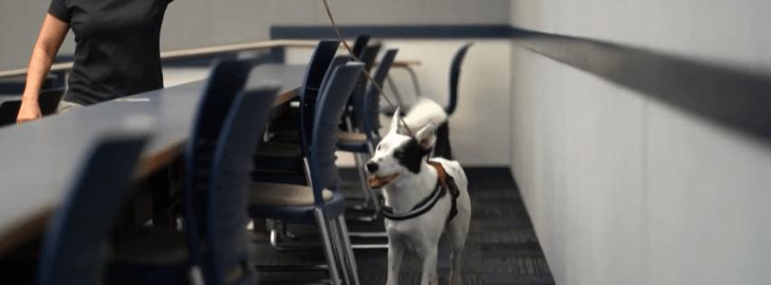 Коронавирус и поисковая собака