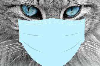 вакцина от коронавируса для животных